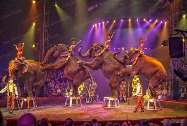 Magnifique troupeau d'elephant