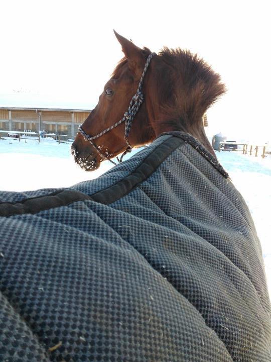 2013# début d'année sous la neige !!!