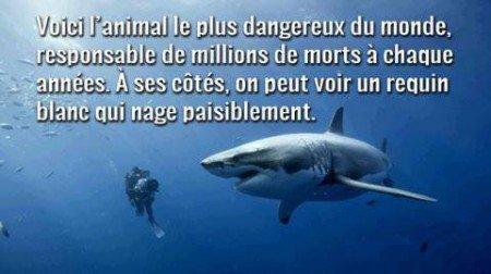 L'animal le plus dangereux du monde!