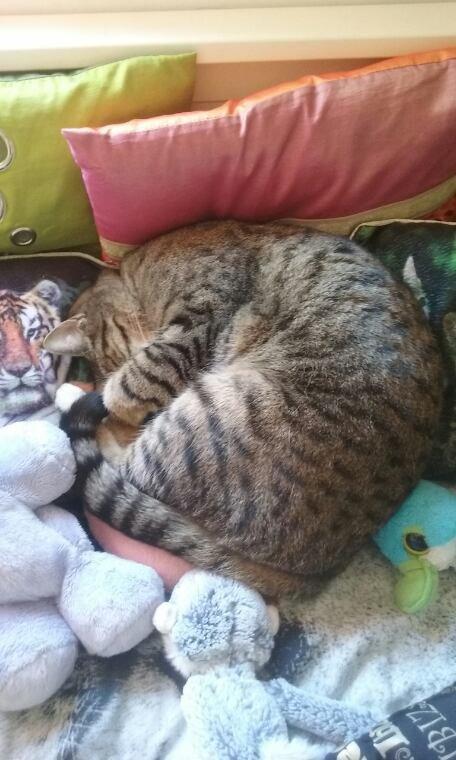 Mon chats et ses positions bizard ...