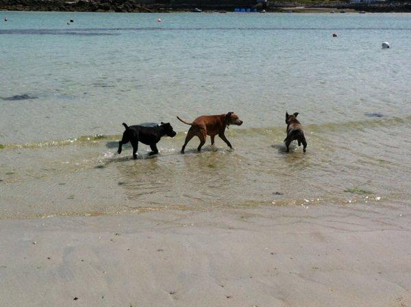 A la plage de tremazan