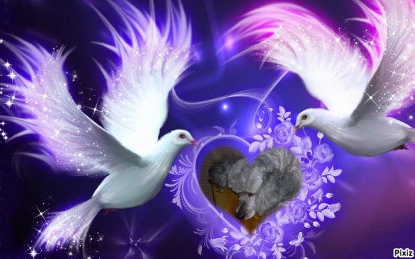 une pensée a mon amie jcigales qui viens de perdre sa petite Bora Bora !!!repose en paix au paradis des loulous petite chérie !!!!  courage a toi mon amie