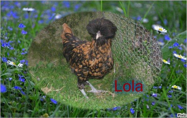 comme je vous l'avais dit hier la famille c'est agrandie voici Tim et Doris les poissons rouge tête de lion le petit canaris Kouky et les petites poules hollandaises huppée Lola et Kitty  !!! très bonne fin de soirée a tous bisous bisous