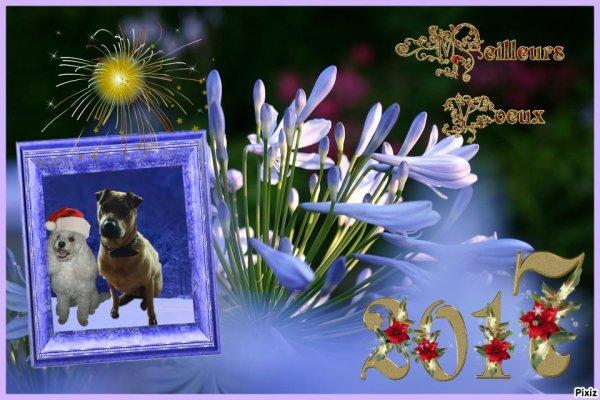 très bonne et heureuse année a tous !!! pleins de gros bisous de Belle -- Toupie-- Maya-- Cloé-- papa -- maman ect ... bon réveillon a tous