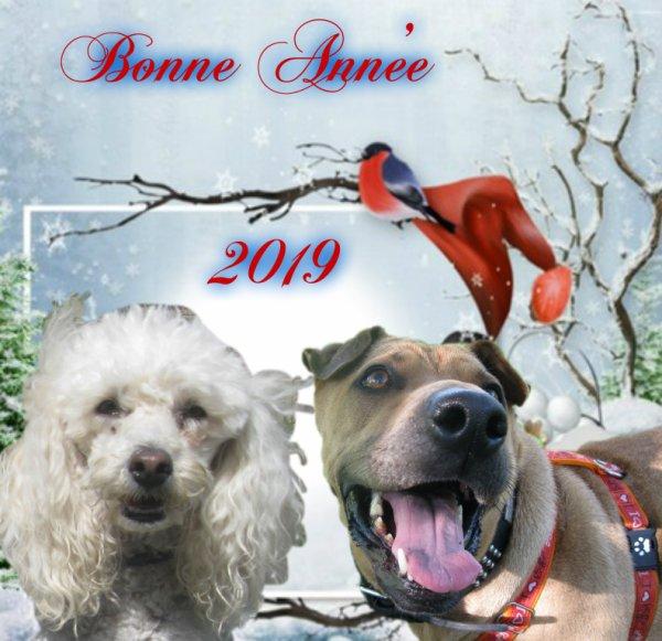 Bonjour les amis !!! ça fait super super longtemps que je ne suis plus venue sur mon blog !!! vous me manquez tous très très fort !!! je ne voulais pas manquer l'occasion de vous souhaiter a tous un très joyeux Noël ainsi qu'une très bonne et heureuse Année 2019 !!! je vous souhaite tout le bonheur que vous méritez !! que cette nouvelle année qui va bientôt commencer vous apporte joie bonheur et santé je vous embrasse tous très très fort !! merci a vous tous pour tous vos gentils messages nous allons bien toupie et moi !!! papa et maman aussi et ils vous embrassent très fort eux aussi !!! mon papa continue ses rééducations et tout ce passe bien gros bisous a tous et prenez bien soins de vous !!!