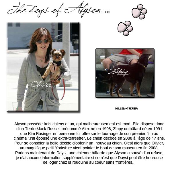 Les chiens de Alyson