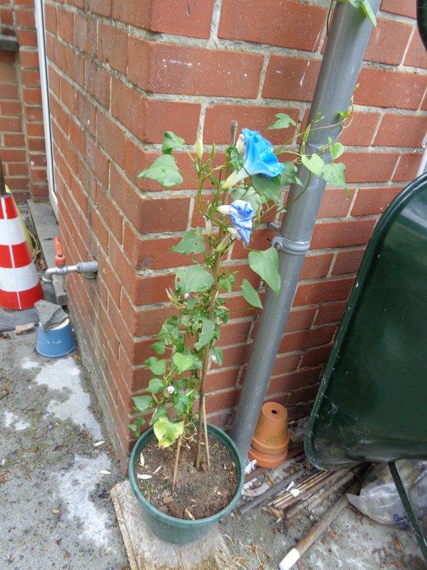 Photos de notre jardin