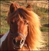 x-HorsesWorld