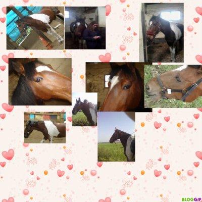 [** Sais luii qui es résponsable de mon bonheur **]    Il est ma raison de vivre, mon Bonheur au quotidien (l) Beibei J'taime d'un amour inexplicable (l)  La plus belle preuve d'amour qui existe c'est la complicité du cavalier et de son cheval (l)