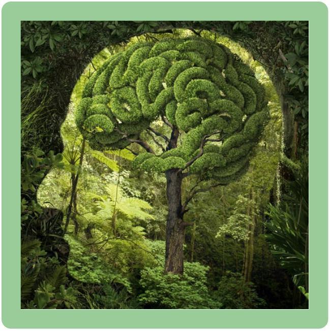 La nature est essentiel à notre corps et à notre cerveau.