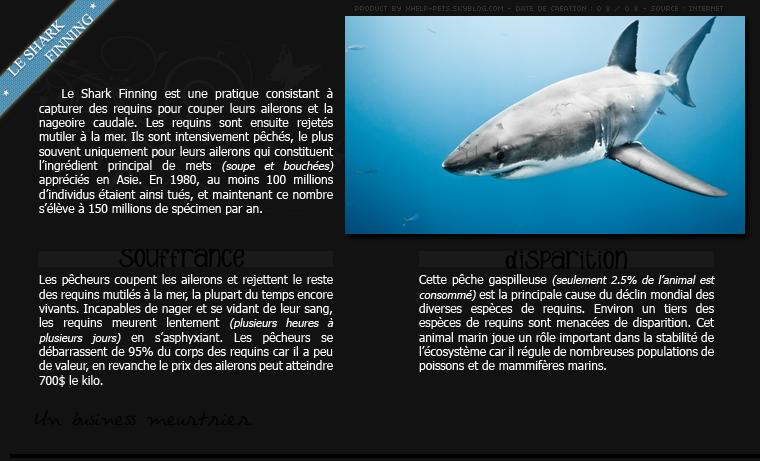 • Le Shark Finning