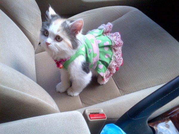 habillage des chats...j'aime