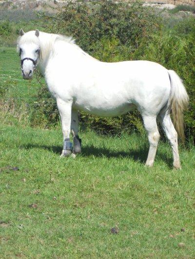 Le cheval est la projection des rêves que l'homme se fait de lui-même : fort, puissant, beau, magnifique.  Il nous offre la possibilité d'échapper à la monotonie de notre condition.