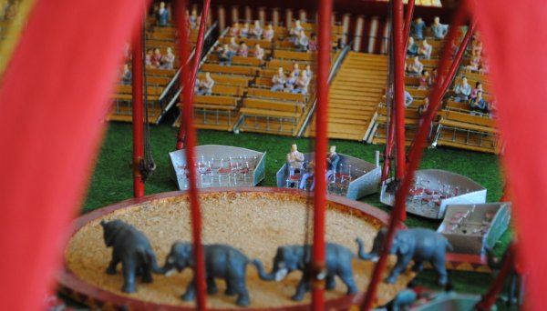 les éléphants rentrent en piste !