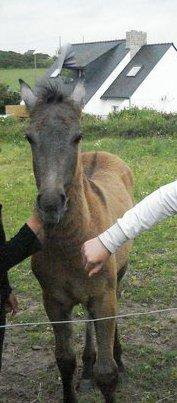 A baby horse ♥
