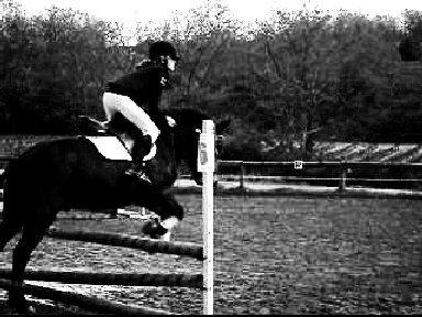 Un jour parfait . Un moment parfait . Un passage parfait . Un cheval parfait . Un concour parfait . ♥