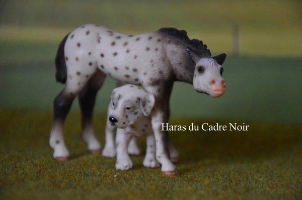 """Photo Show """" Nos amis les chevaux et leurs petits compagnons ! """" :D"""