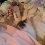 my kitty i love