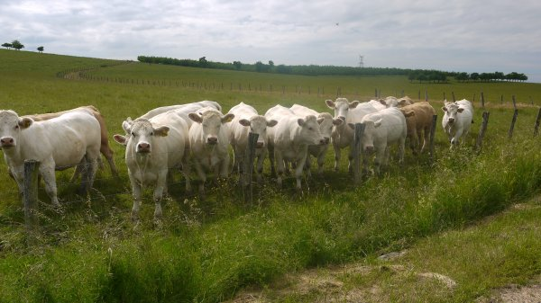 Un blog agricole avec des vache s'est mieu