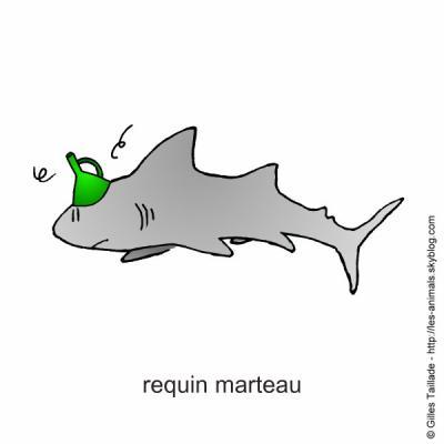 Requin marteau les animals dessins humoristiques sur for Comment dessiner un requin marteau