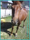 Photo de Art-Horse-Montage