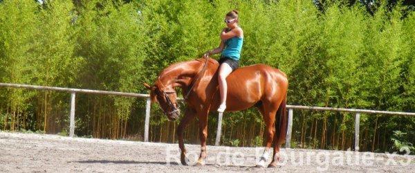 Parce que rien ne vaut la complicité d'un cavalier & de son cheval ♥