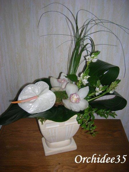 anthurium, orchidée, ornitogalum