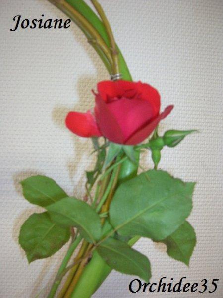 rose, arum, lysianthus