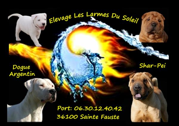 Elevage Les Larmes du Soleil, chiots dogue argentin et shar pei