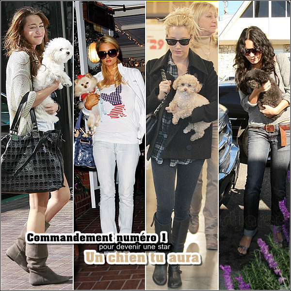 miley-source.skyrock.com  Divertisemment. « Les commandement à suivre pour être une,' vrai STARS  on commence par Un Chien tu auras comme Miley Cyrus ,Paris Hilton , Ashley Tisdale ou encore Vanessa Hudgens _PARTIT   1     miley-source.skyrock.com