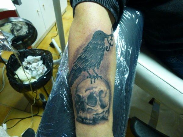 corbeau posé sur un crane