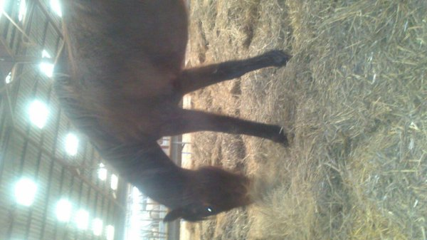 L'arrivé de mon cheval le 13 avril 2013 à 3 h