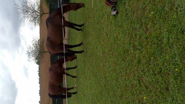 Les chevaux à la maison pour le midi
