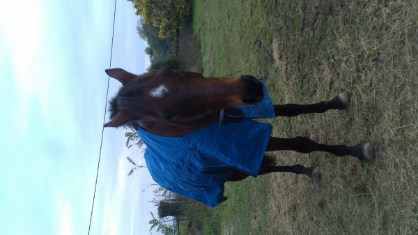 Mon cheval avec sa couverture