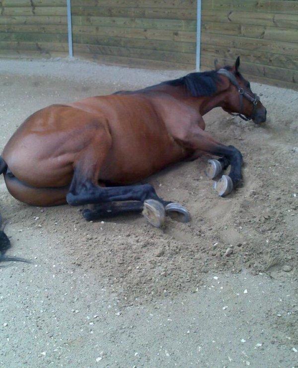 Je t aime mon cheval