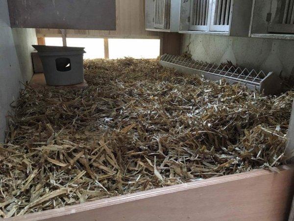 Paille de pois installée pour la saison de concours chez les veufs