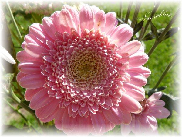 rien qu'une fleur .....