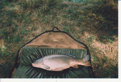 Quelques poissons des années passées