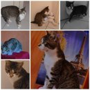 Photo de NosAmisles-Chats