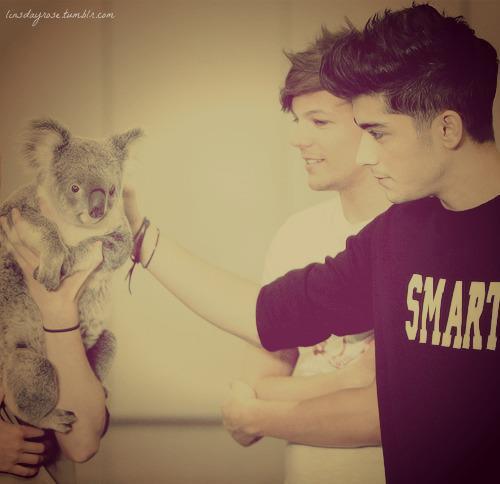 Liam . Zayn . Louis . Harry . Niall