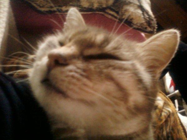 Mon chat ! <3