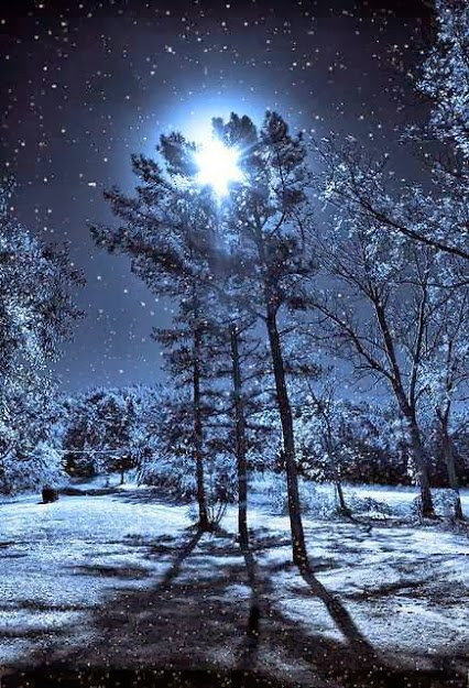 Nuit de neige.