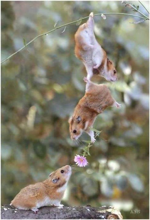 Les vrais amis sont toujours là quand vous en avez besoin !