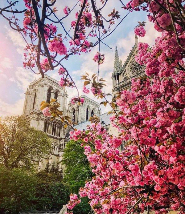 Notre-Dame se pare de fleurs !!