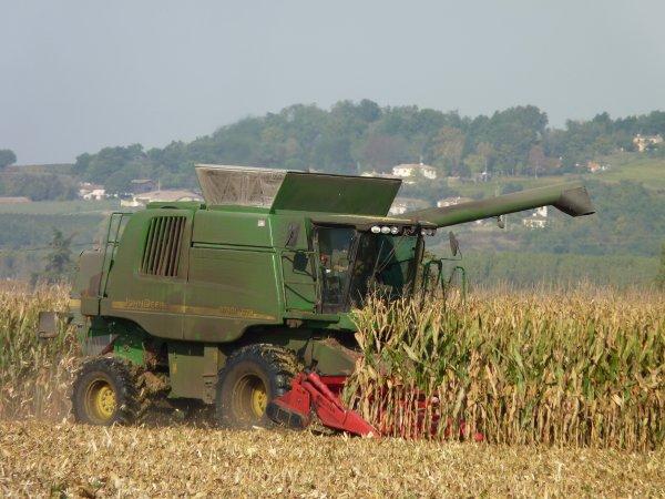 Moisson 2010 de maïs