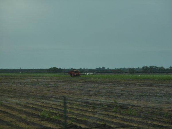 Recolte de carottes 2011