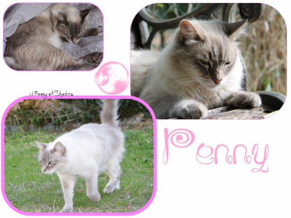 Penny ♥