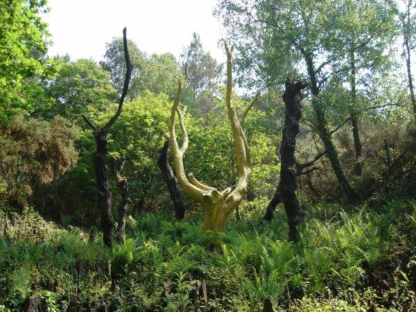 SORTIE DU JEUDI 24 MAI ( L'arbre d'or à Trehorenteuc Morbihan )