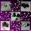 les petites de nala ( elles ne sont pas a moi ) , mais je les mets quand meme sur mon blog car je les trouve trop belles :-) , elles sont nées le 29.01.14