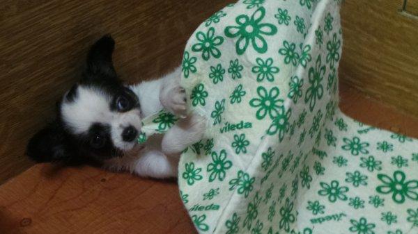 la petite nariko : fifille de annick :-)